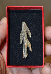 "An Extremely Rare segment of an Upper Paleolithic ""Magdalenian"" bone, barbed harpoon, France. SOLD"